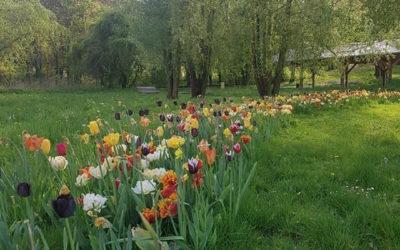 Le printemps déconfiné