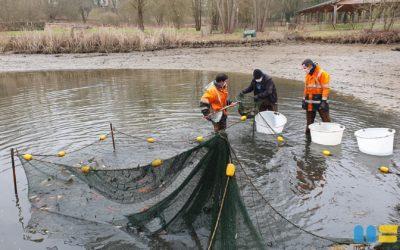 Entretien du plan d'eau au parc municipal F. Brigidi